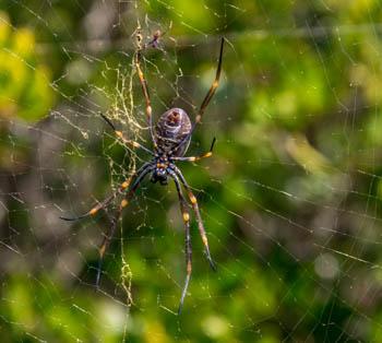 05_spider