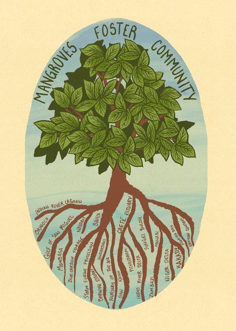 Mangroves Foster Community